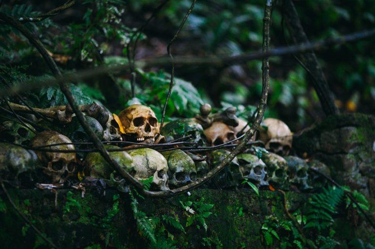skulls in jungle