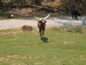 Safari park-Brown's family field trip