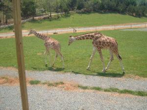 safari park-browns family field trip