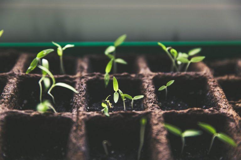 baby plants in soil