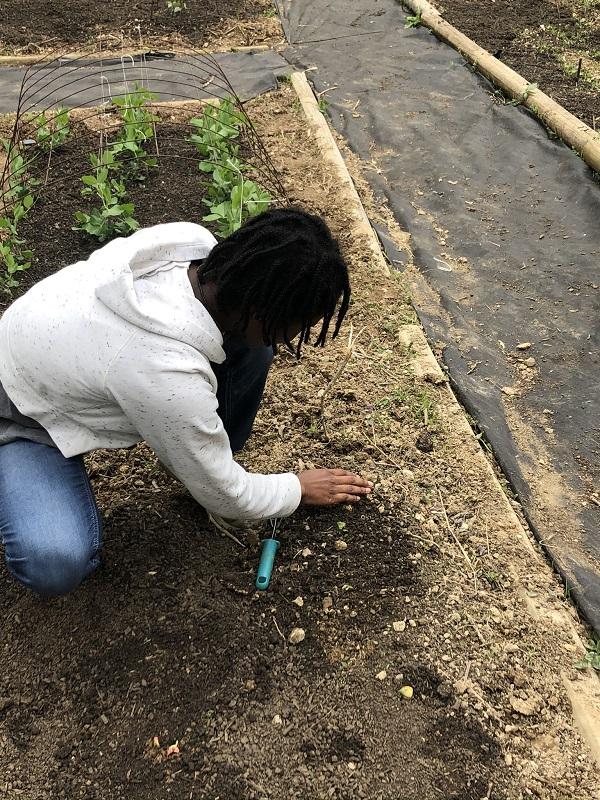 Girl planting seeds in garden