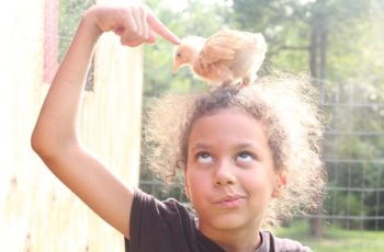 How to Care For Your Chickens in Homeschool Biology